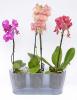 prusvitny-truhlik-triola-pro pestovani-orchideji.jpg